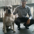 Felippe`s dog boarding and others dog boarding & pet sitting