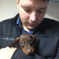 Dan's Pet Services dog boarding & pet sitting