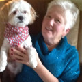 Gayle's Doggy Care dog boarding & pet sitting
