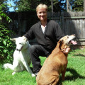 The Perfect Puppy Play land  ! dog boarding & pet sitting