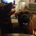 loving fur baby friendly home dog boarding & pet sitting