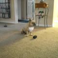 Dog Nanny dog boarding & pet sitting