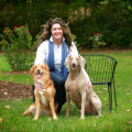 Clair's Pet Sanctuary (Board&Train) dog boarding & pet sitting