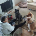 Christine,s dog days dog boarding & pet sitting