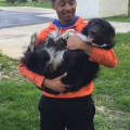 Kenny McClellan Cudahy dog boarding & pet sitting
