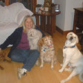Your Pet Will Be Pampered! dog boarding & pet sitting