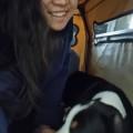 Song's Dog Boarding dog boarding & pet sitting