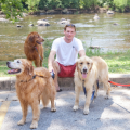 Easy Option in Southie/Downtown! dog boarding & pet sitting