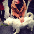 Doggie Howlidays dog boarding & pet sitting