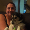 Aresha's Dog Boarding dog boarding & pet sitting