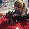Natalia's Puppy Palace dog boarding & pet sitting