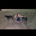 Erika's Fairview Dog care. dog boarding & pet sitting