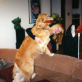Candlewood Canine Country Club dog boarding & pet sitting