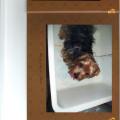 Jon & Kasey's Kritter Korner dog boarding & pet sitting