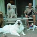Doubletree Pet Resort in Folsom dog boarding & pet sitting