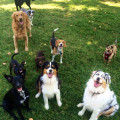 Doggie Paradise in a Home Setting dog boarding & pet sitting