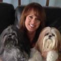 Doggie Dynasty Daycare & Inn dog boarding & pet sitting