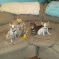 Pawsibly the Best For You! dog boarding & pet sitting