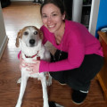 Happy Hounds dog boarding & pet sitting
