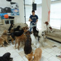 Capital Animal Rescue-Silver Spring dog boarding & pet sitting
