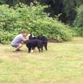 Just a dog lover ! dog boarding & pet sitting