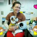 The small dog vet nurse dog boarding & pet sitting
