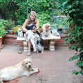 Just Like Home Boarding-Sunland dog boarding & pet sitting