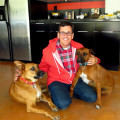 StarBarks - In the Heart of WeHo dog boarding & pet sitting