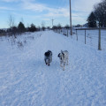 Destination Dog Park dog boarding & pet sitting