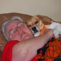 Pet Paradise - Beech Grove, Indiana dog boarding & pet sitting