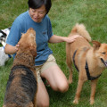 Pawtel in Gaithersburg dog boarding & pet sitting