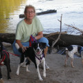 One Yappy Family dog boarding & pet sitting