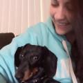 Roxy's Rad Pad! dog boarding & pet sitting
