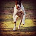 Sioux City Ranch Performance Dogs dog boarding & pet sitting