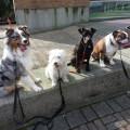 Loki and FRIENDS dog boarding & pet sitting