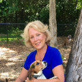 Paws & Play Dog Camp dog boarding & pet sitting