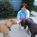 A 5 Star Pet Stay Experience dog boarding & pet sitting
