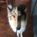 Total Dog Heaven!! dog boarding & pet sitting