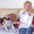 Donna's Pampered Pets dog boarding & pet sitting