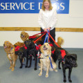 Just for Dogs Retreat on Black Mtn dog boarding & pet sitting