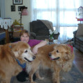 Golden Retreat dog boarding & pet sitting