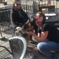 Running Paws dog boarding & pet sitting