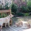 Nala's Main Line Doggie Daycare dog boarding & pet sitting