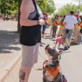 Dogego Dog Boarding dog boarding & pet sitting