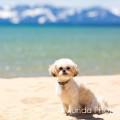 Chloe's Retreat dog boarding & pet sitting