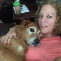 Lovable Golden Loves Friends! dog boarding & pet sitting