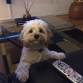 Care & Loving Attention Guaranteed! dog boarding & pet sitting