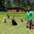 Master Dog Trainer - Retired USAF dog boarding & pet sitting