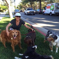 Waves & Wags dog boarding & pet sitting