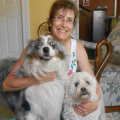 Green Acres Farm Pet Retreat dog boarding & pet sitting